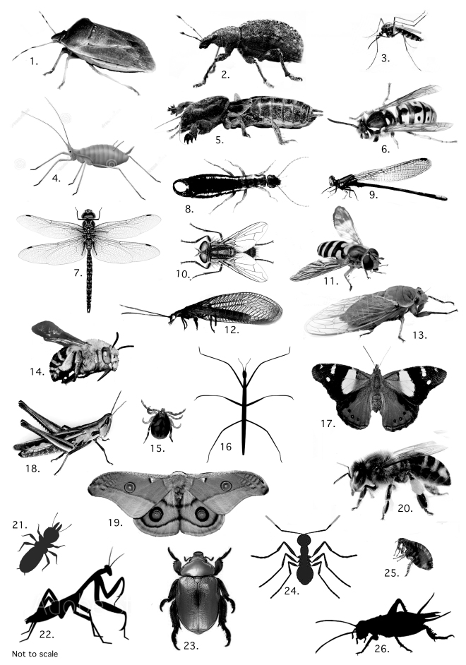 26 Insects.tif
